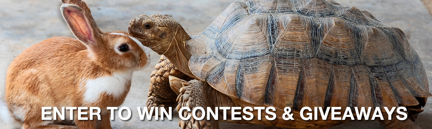 Contests & Giveaways